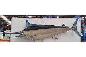 Large Marlin Display Piece
