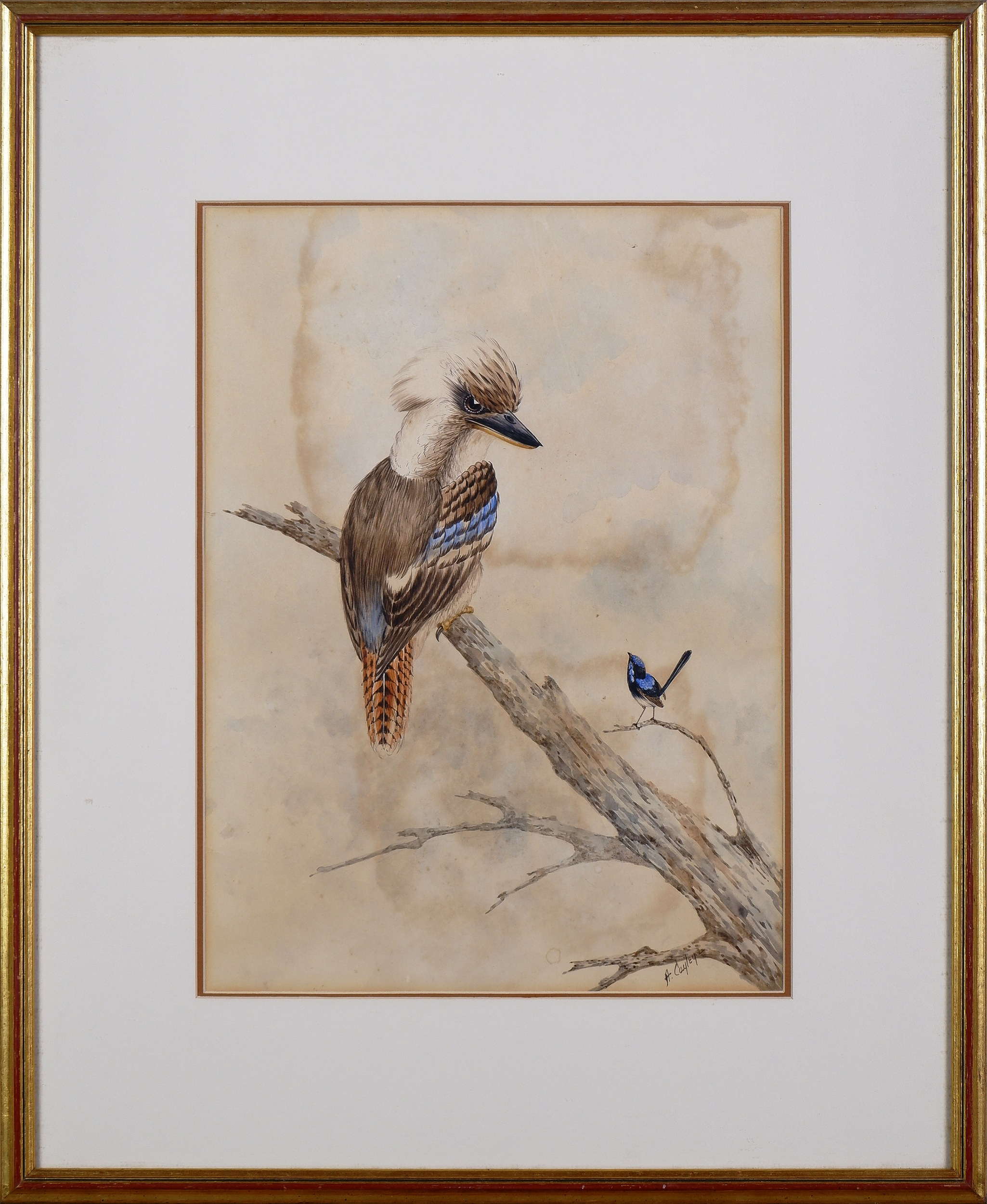 'Alice Cayley (Early 20th Century), Kookaburra and Wren, Watercolour'