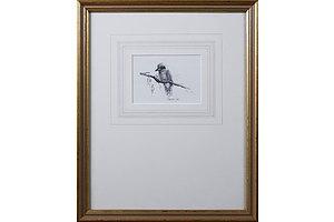 Margaret Carr, Kookaburra Alone, Pencil