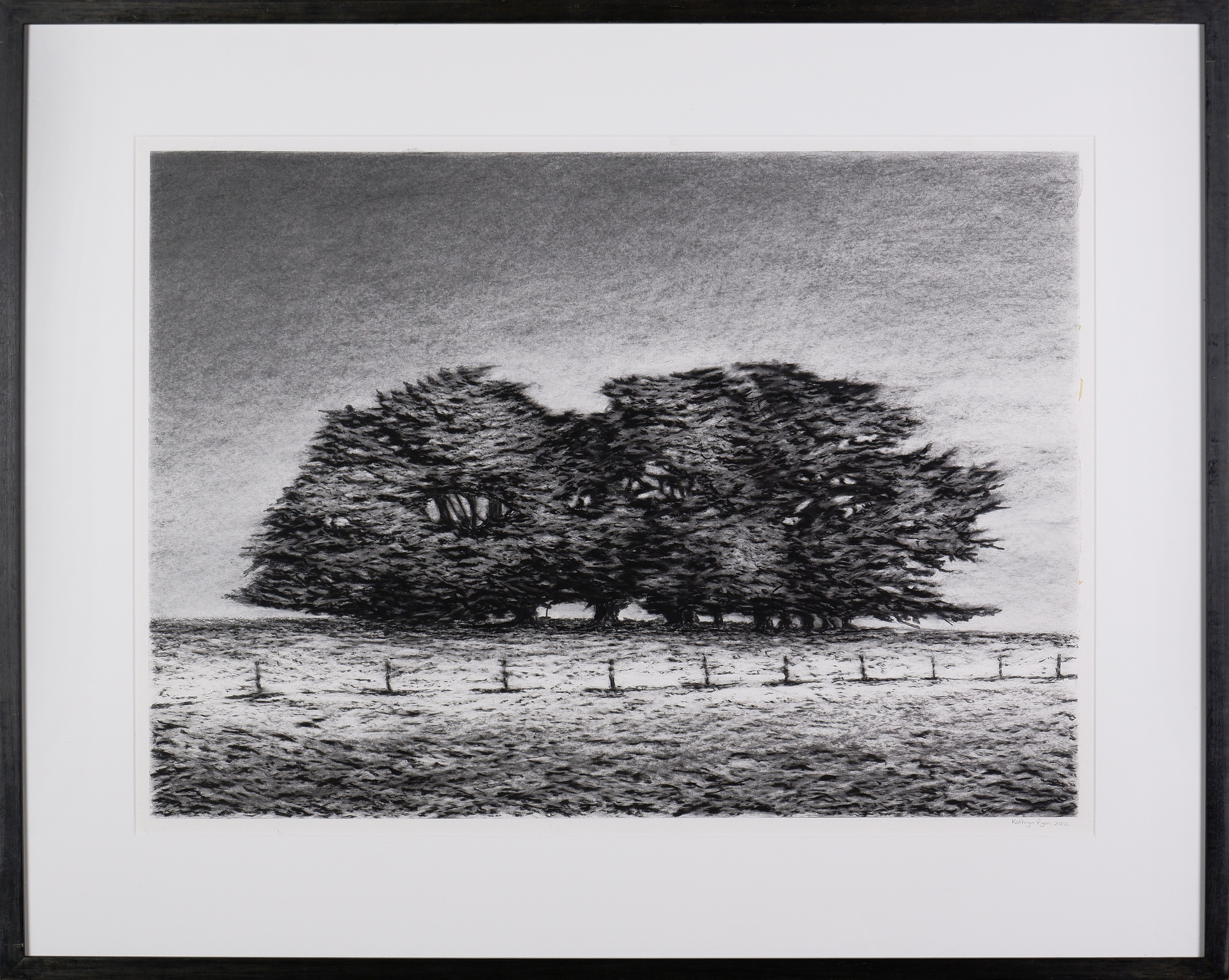 'Kathryn Ryan (born 1965), Cypress Cluster 2012, Charcoal on Paper'