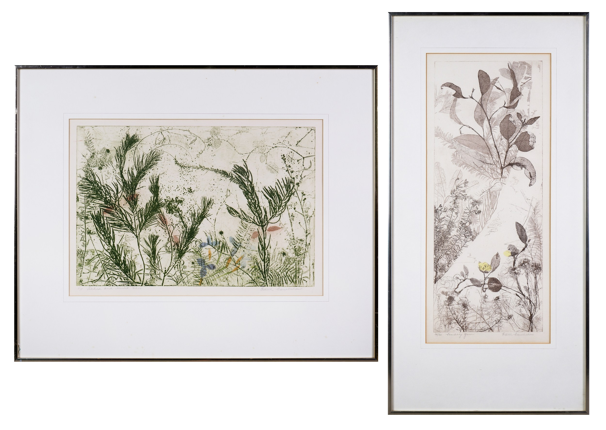 'Edith Cowlishaw (born 1924), Scrubby Gum, Etching; Hakea and Iris, Woodcut, largest 50 x 20 cm (2)'