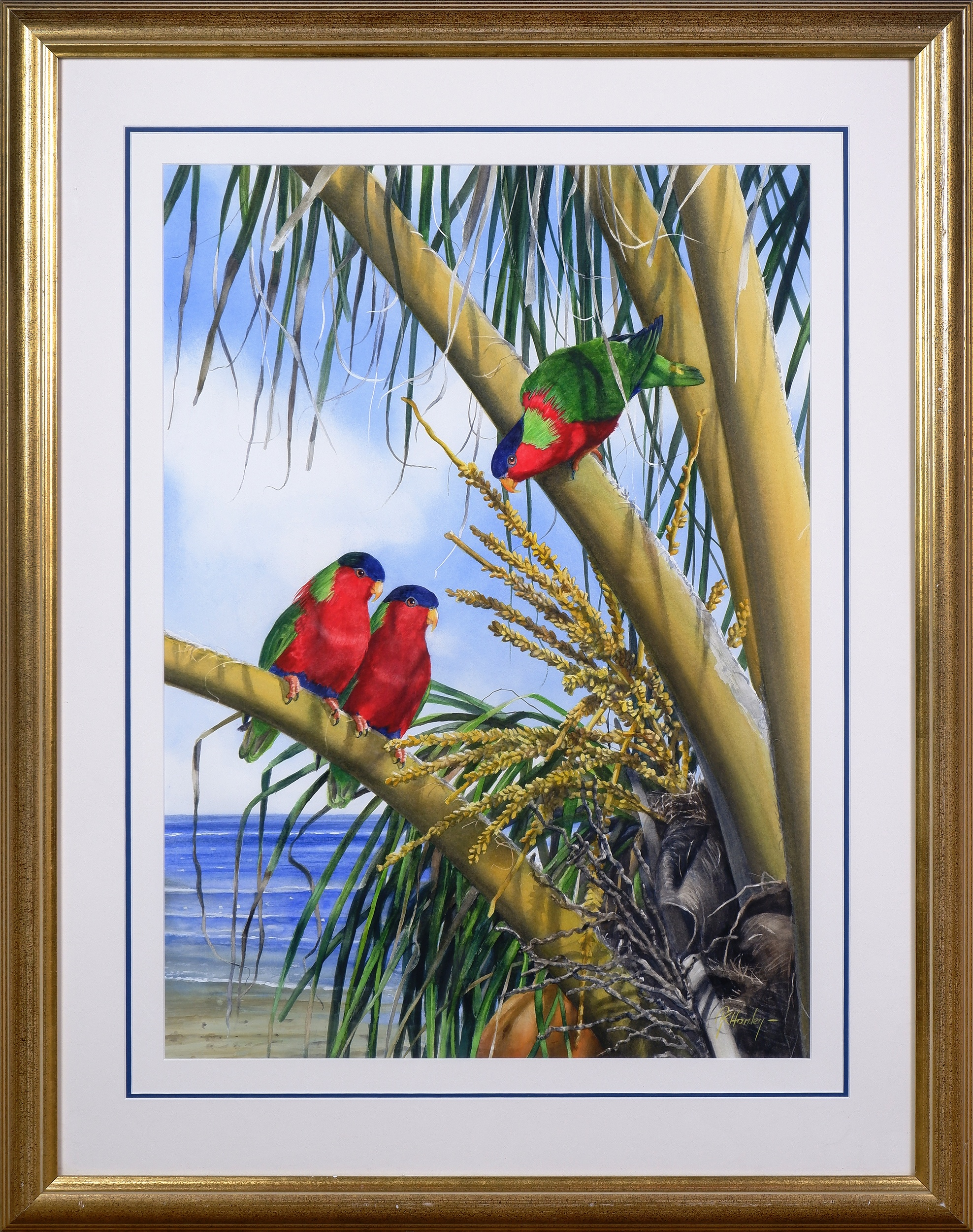 'Gordon Hanley (born 1954), Collared Lory, Watercolour'