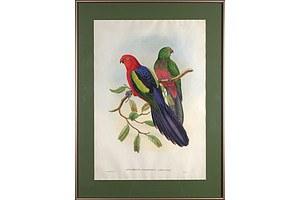 John Gould (1804-1881), Aprosmictus Callopterus, Hand Coloured Lithograph
