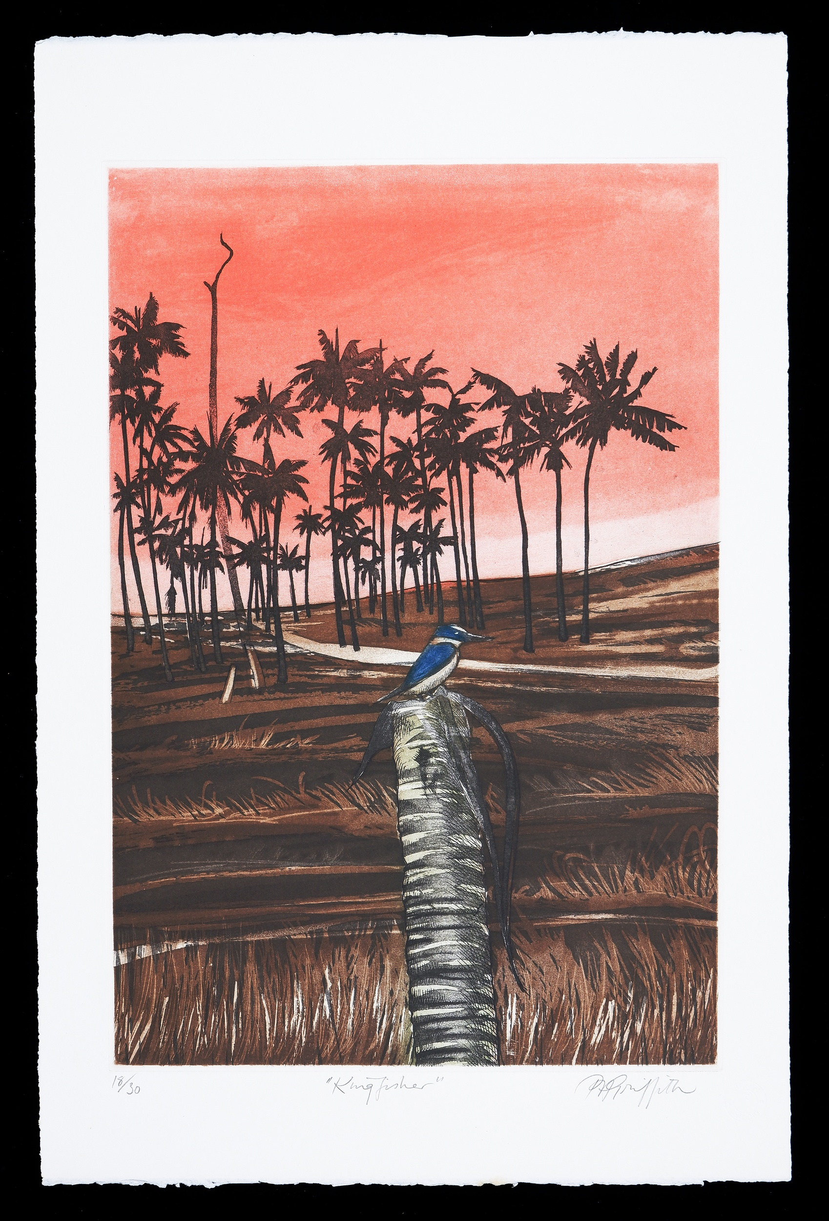 'Pamela Griffith (born 1943), Kingfisher, Coloured Etching Edition 18/30, 45 x 30 cm (image size)'