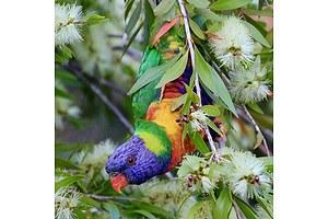 L45 - Native Australian Bird Prints