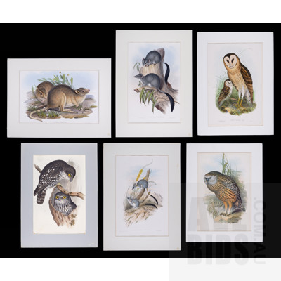 A Group of Six Unframed John Gould Hand-Coloured Lithographs, each approx. 50 x 30 cm (image size) (6)