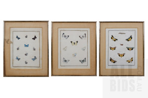 Three Framed Antique Hand-Coloured Prints of Butterflies (3)