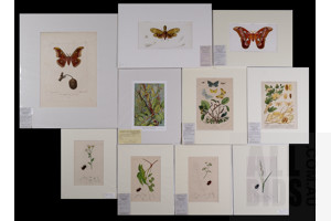 A Collection of Ten Antique & Vintage Engravings and Offset Lithographs of Insects Including Moths, Caterpillars & Beetles (10)